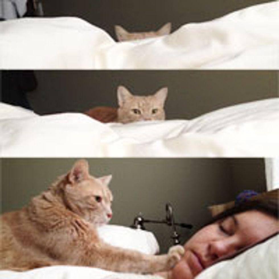 Stealthy Alarm Cat