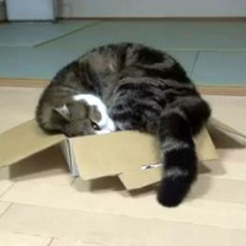 Things Maru Does Throughout the Day