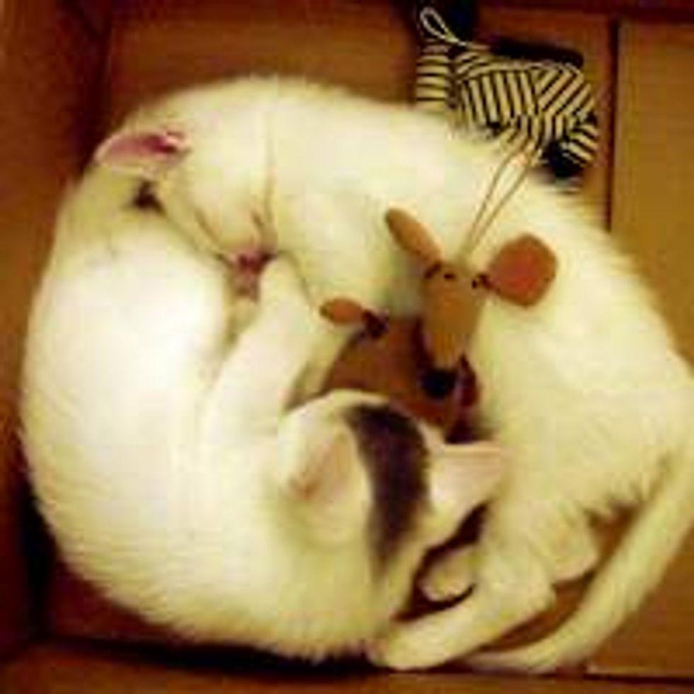 Purrfect Furry Nap Buddies