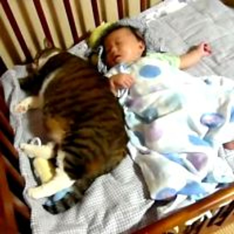 Kitty Napping with Best Human Friend
