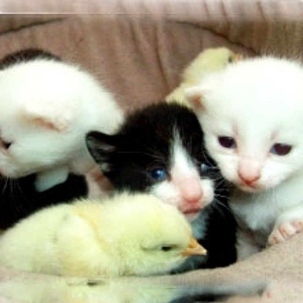 Kitties and Their Chirpy Friends
