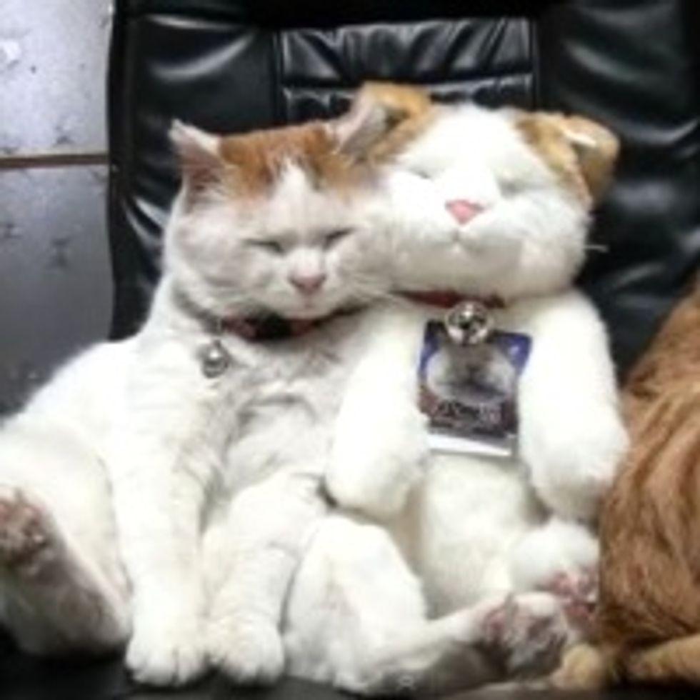 Sneaky Shiro Kitty Impostor