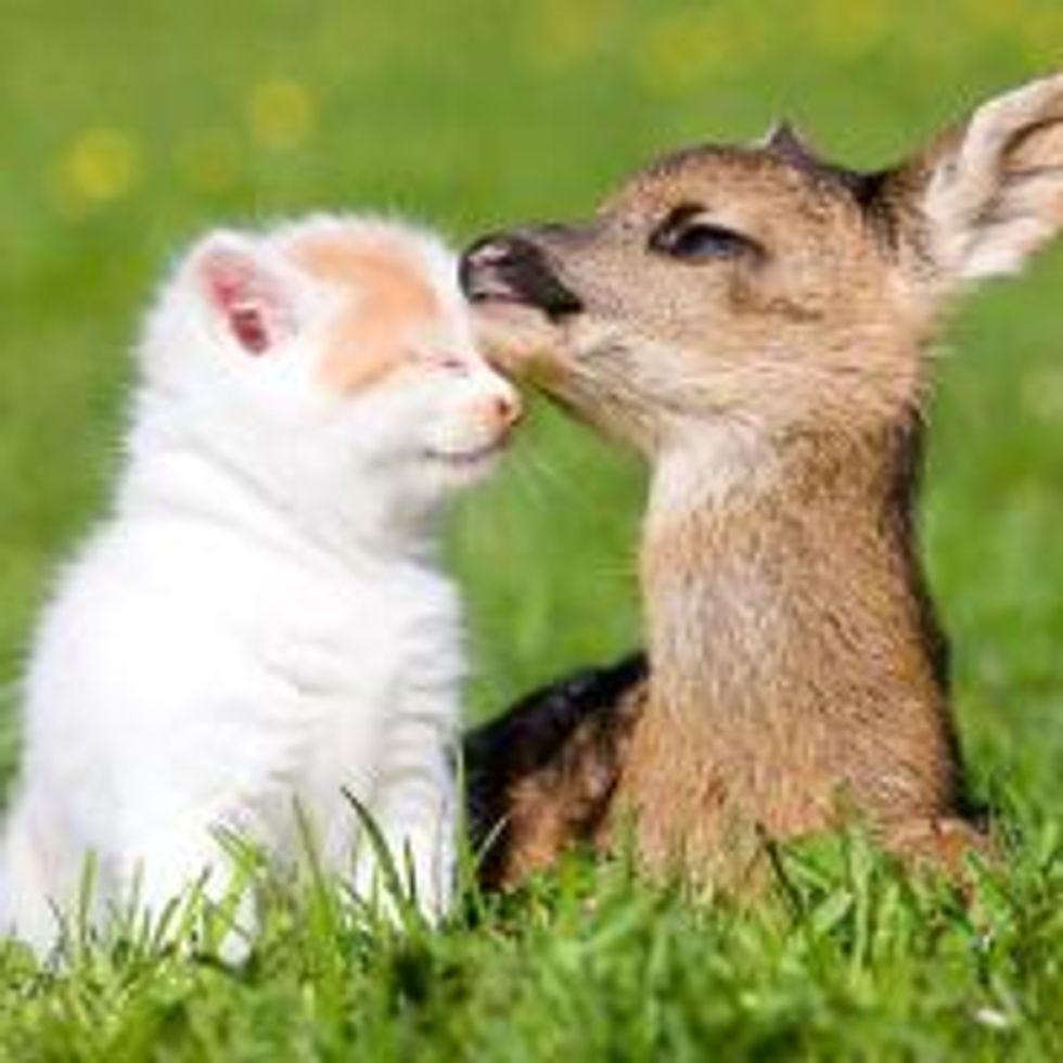 Kitten and Deer, Best of Friends