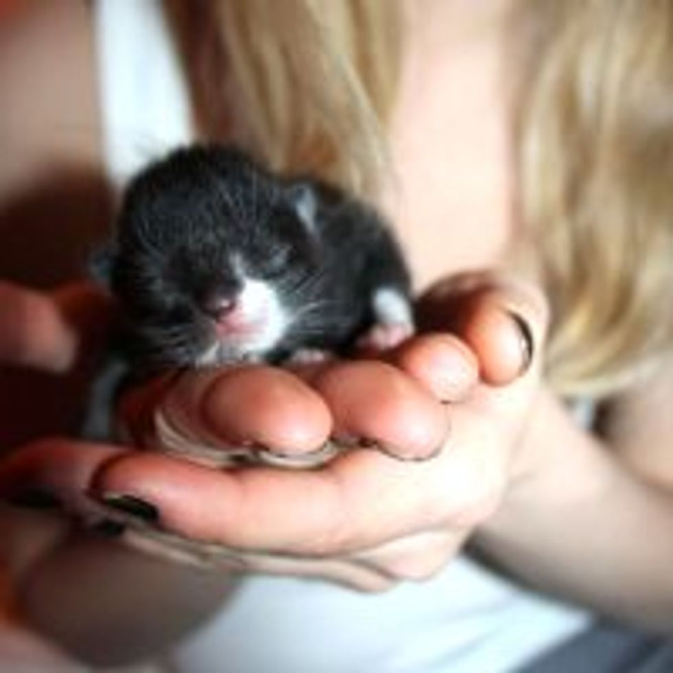 Itty Bitty Bundle of Cute