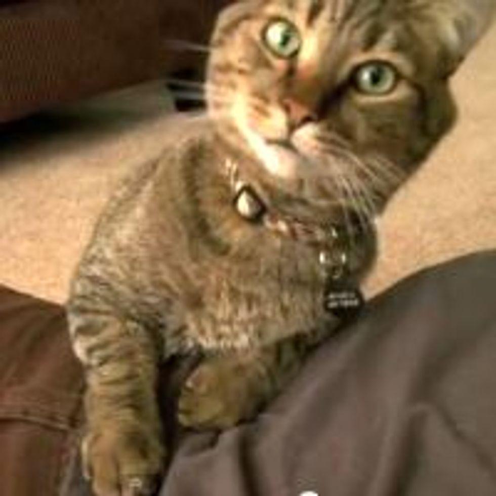 Kitty Chiropractor