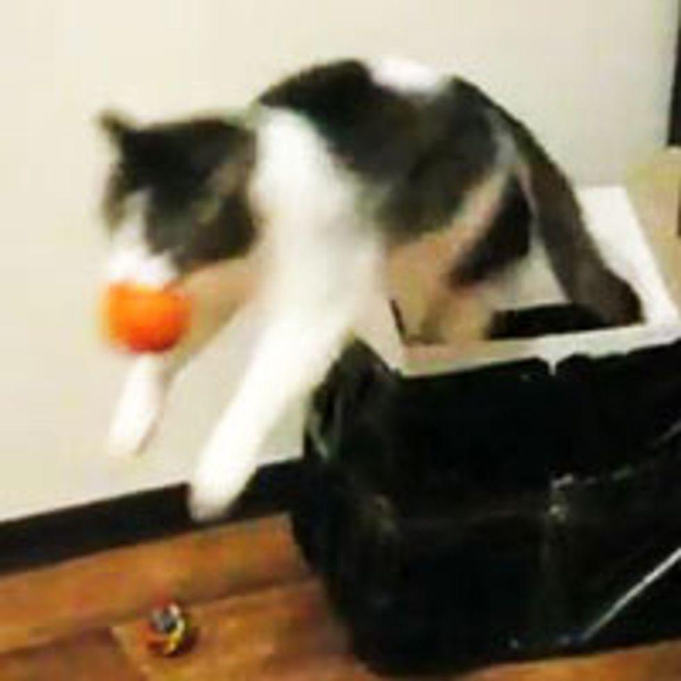 Smart Fetching Cat
