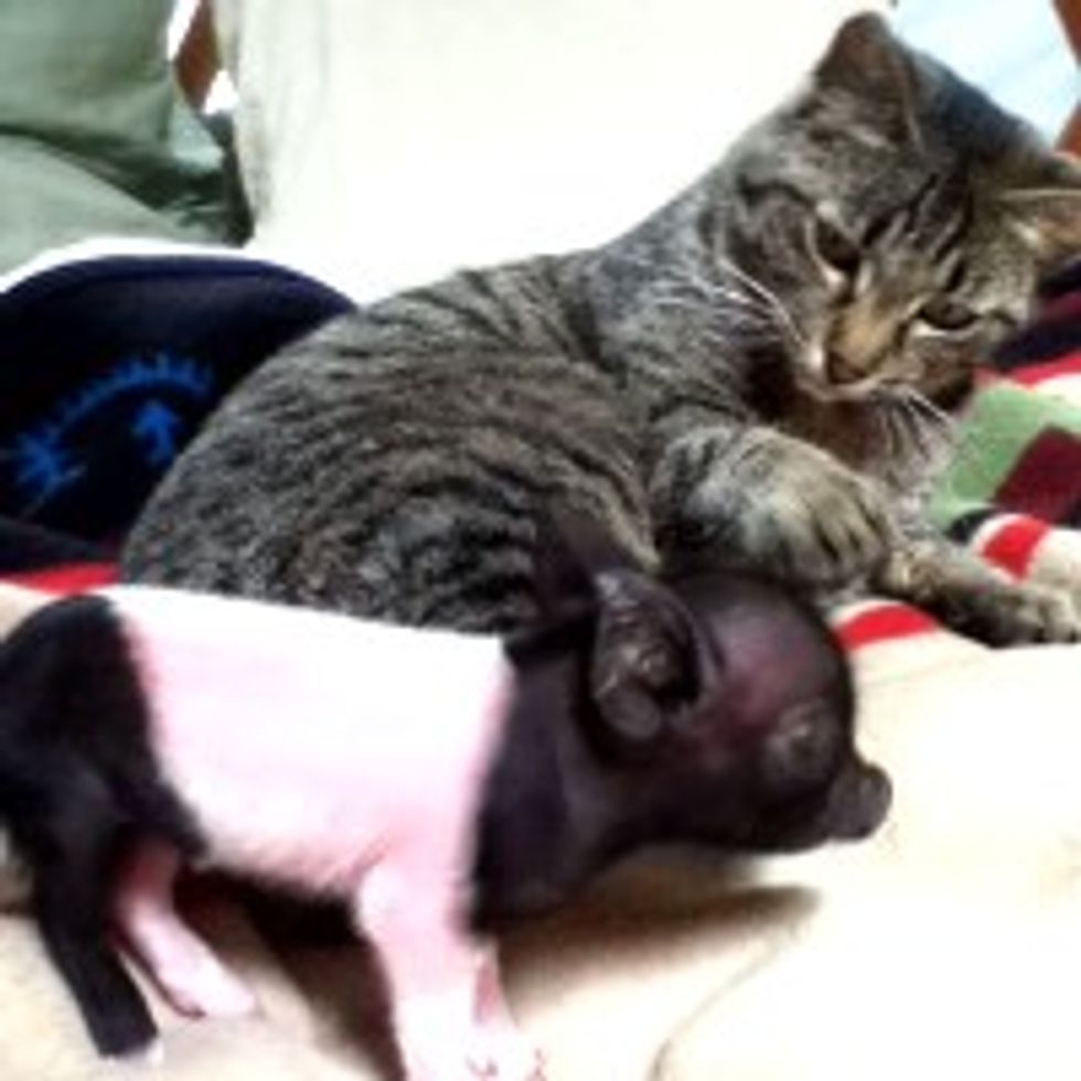 Kitty Finds Piggy, Friends for Life