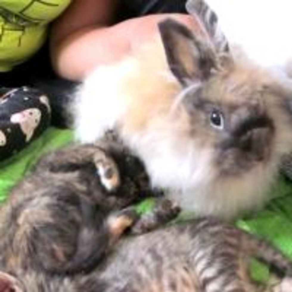 Kitties and Their Bunny Cat-sitter