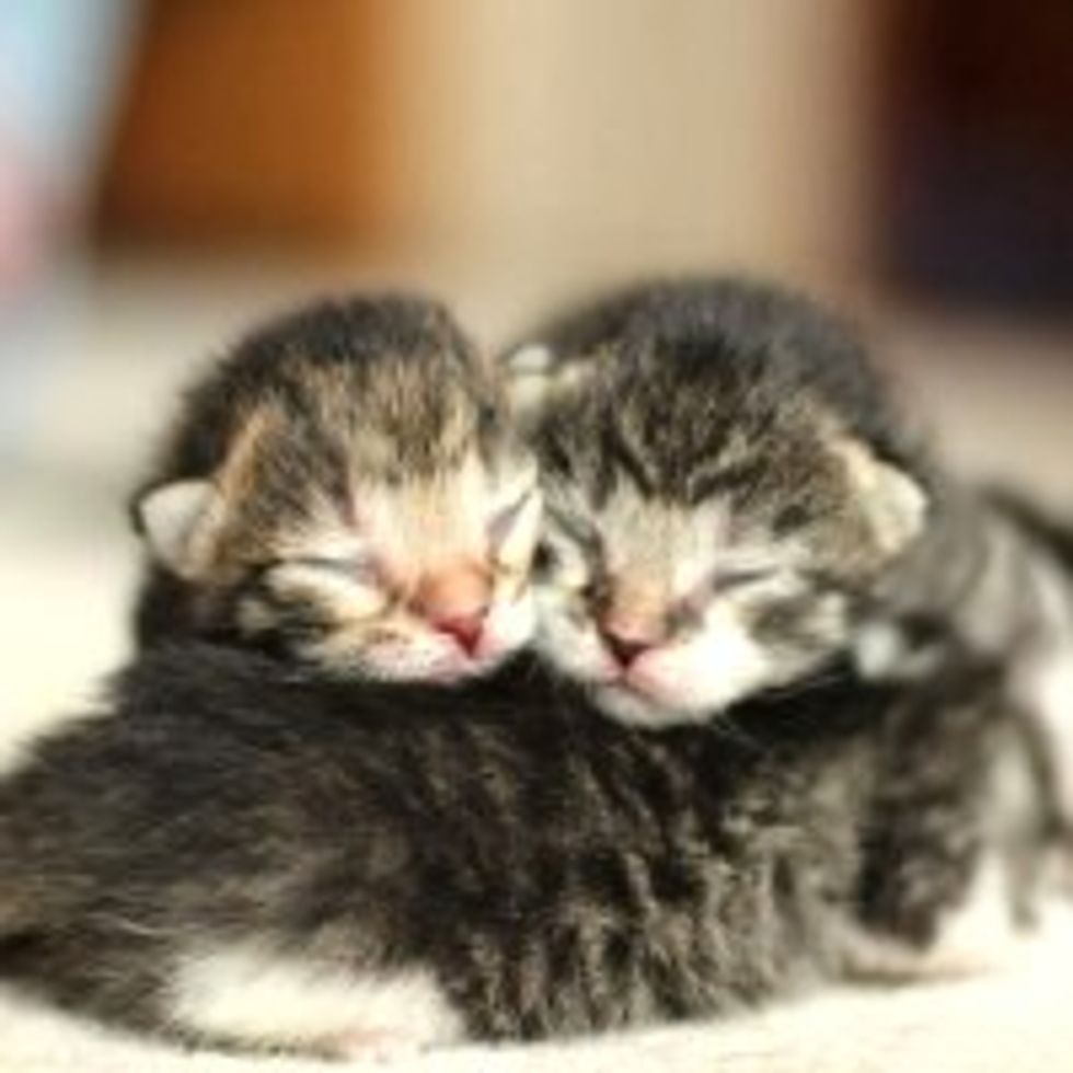 First Lesson in Kittenhood: Pile Up