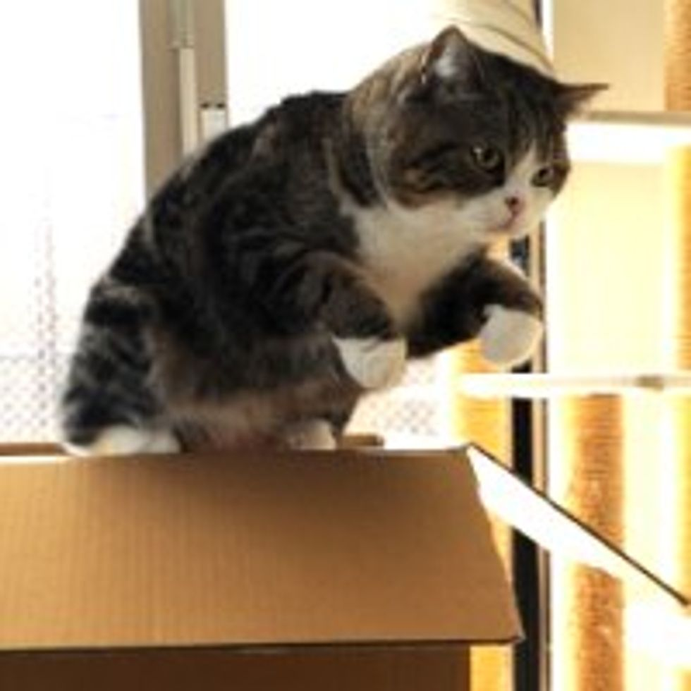Maru and Too Many Boxes