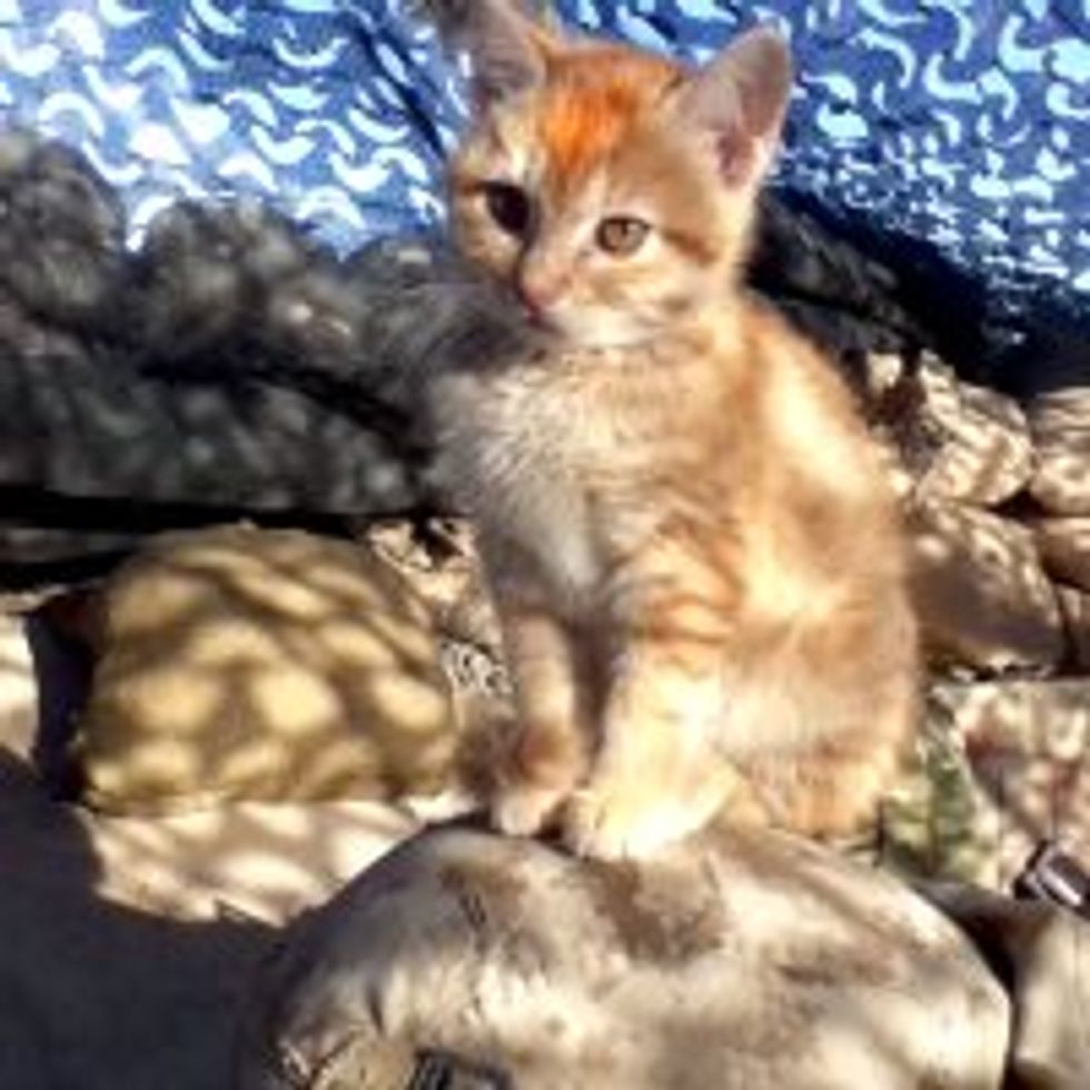 Little Afghan Kitten Becomes Friends with US Marines