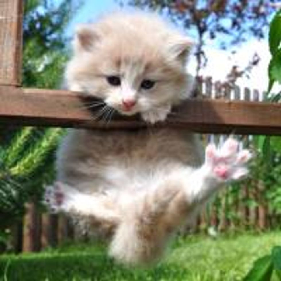 Kitty Making His First Climb