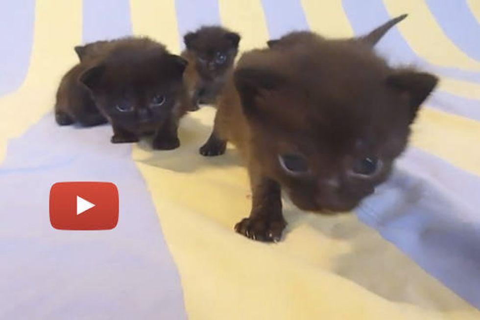 Fuzzy Furry Family of Seven