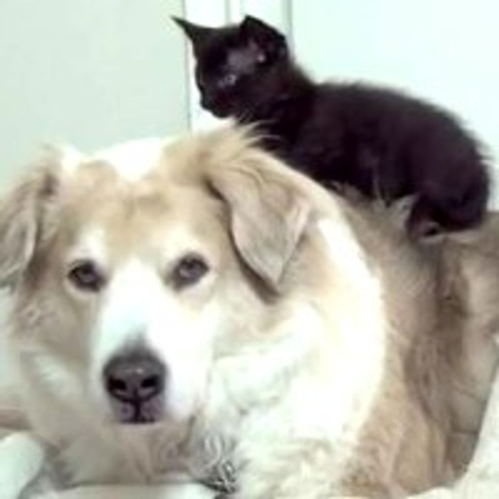 Foster Kitties and Their Canine Baby-sitter