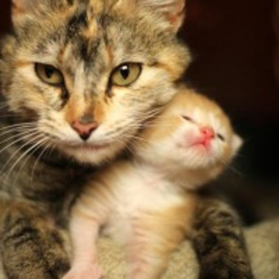 Mama Will Protect You!