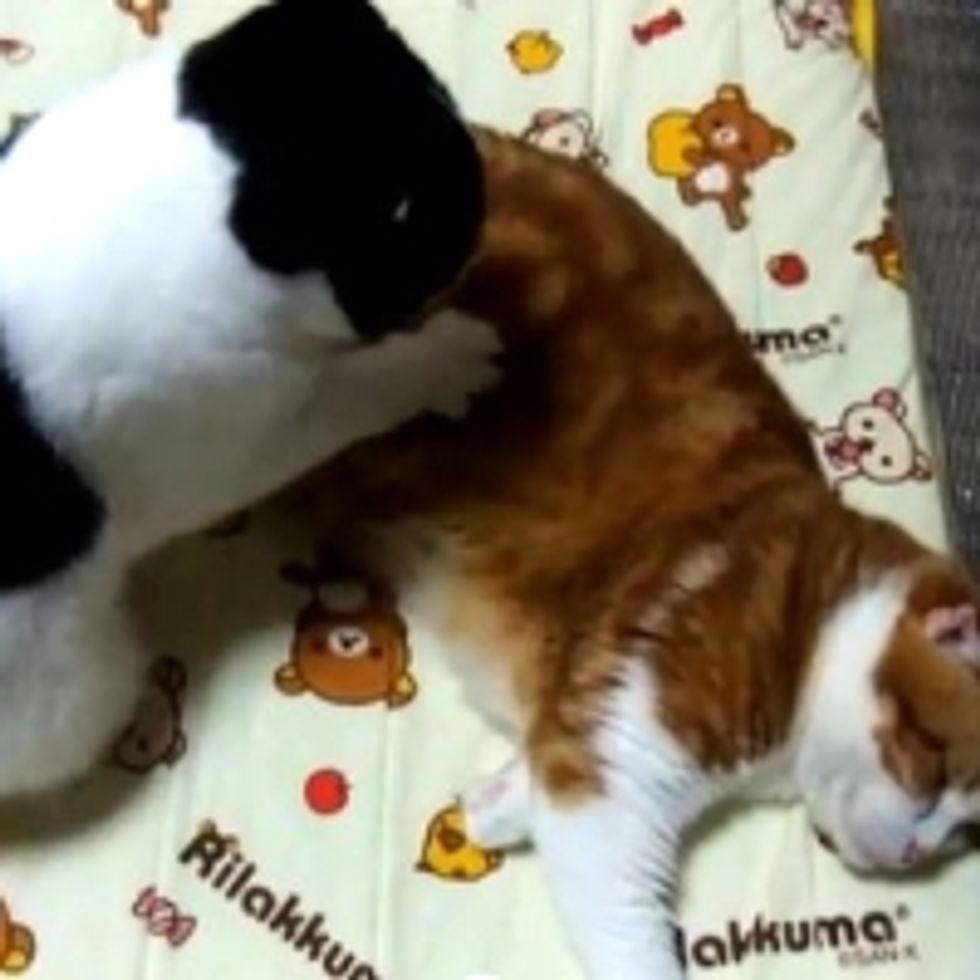 Kitty Massage Parlor