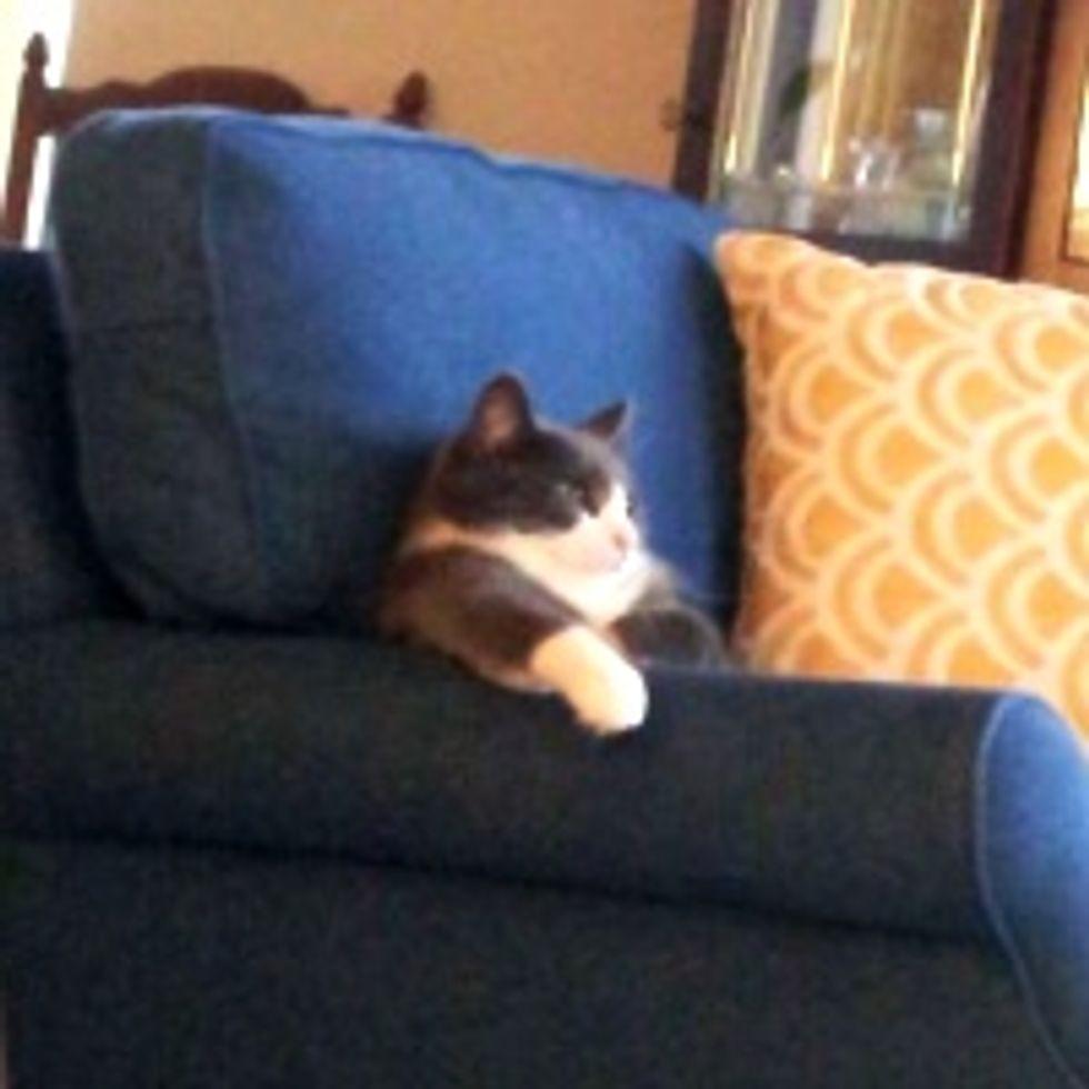 Kitty Watching TV Like a Boss