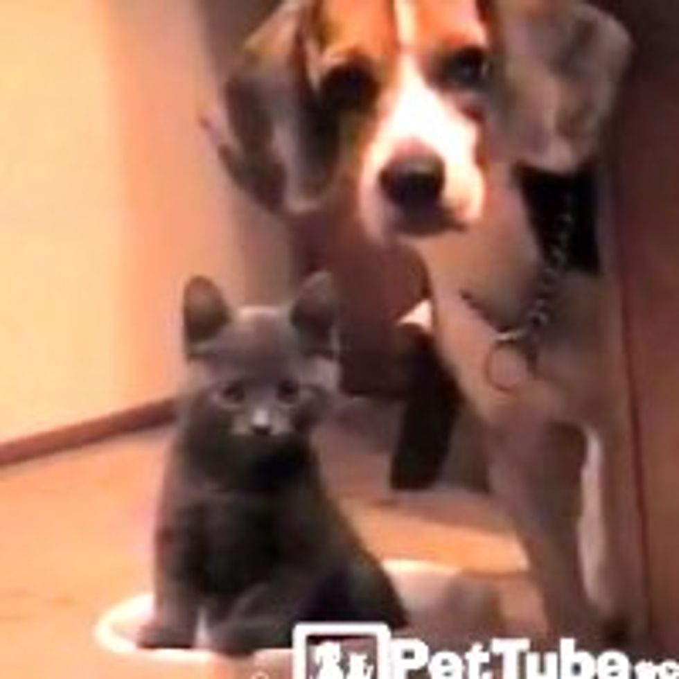 Kitty Takes Over Doggie's Food Bowl