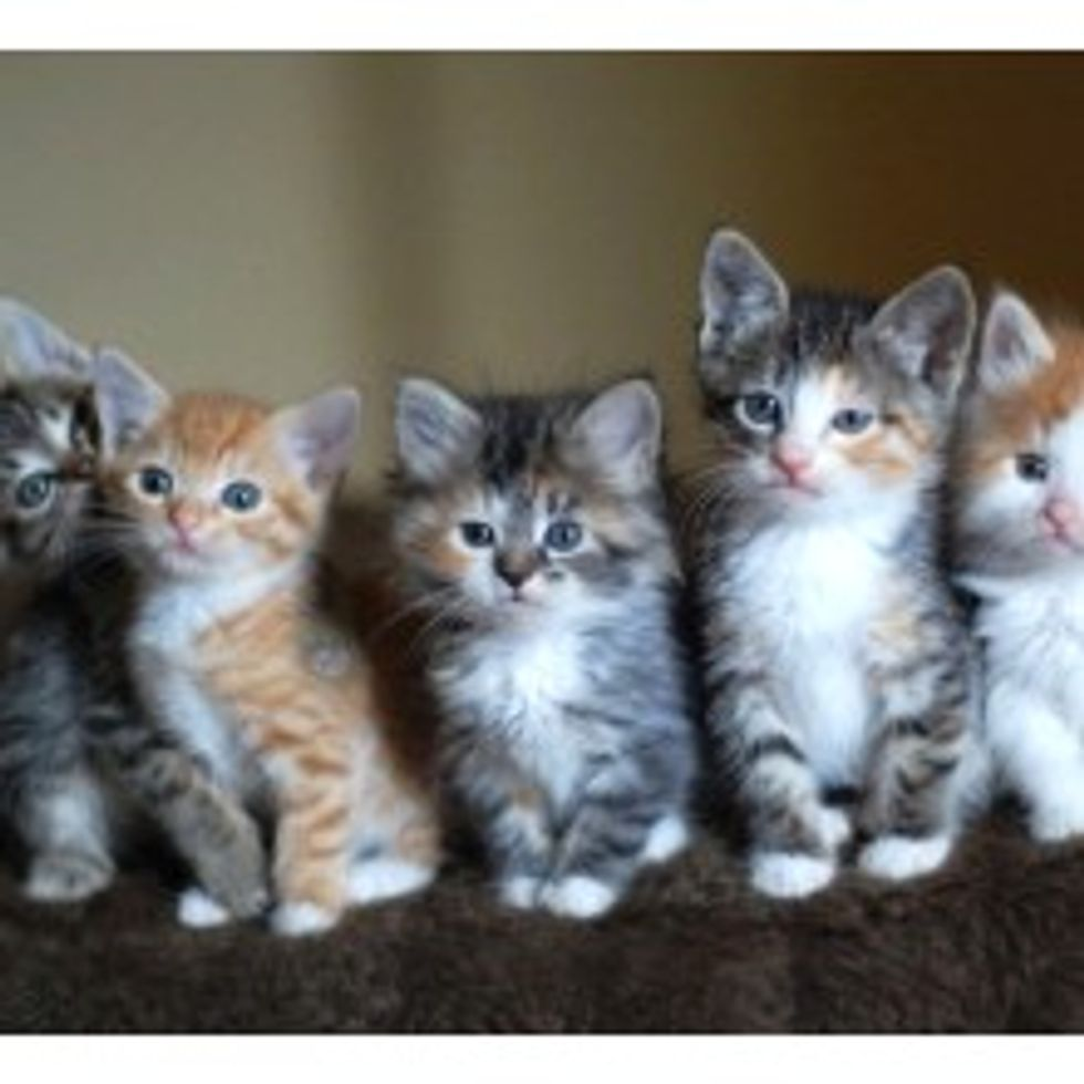 One of These Kitties is Different...
