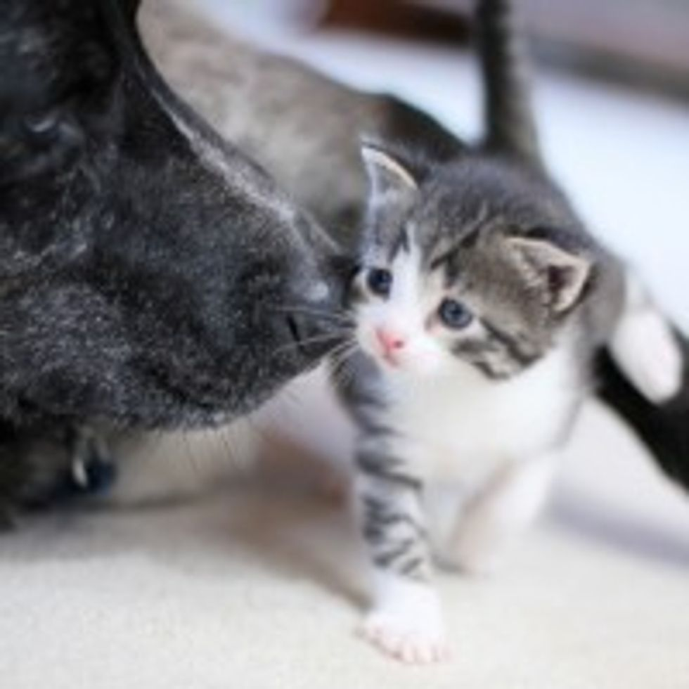 Kitty Demands a Kiss from Doggie