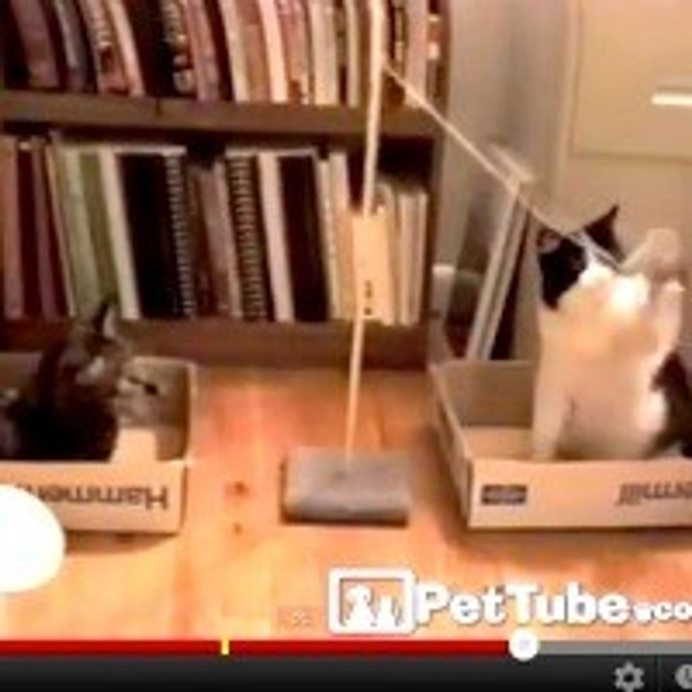 Kitty Tetherball Battle Royale