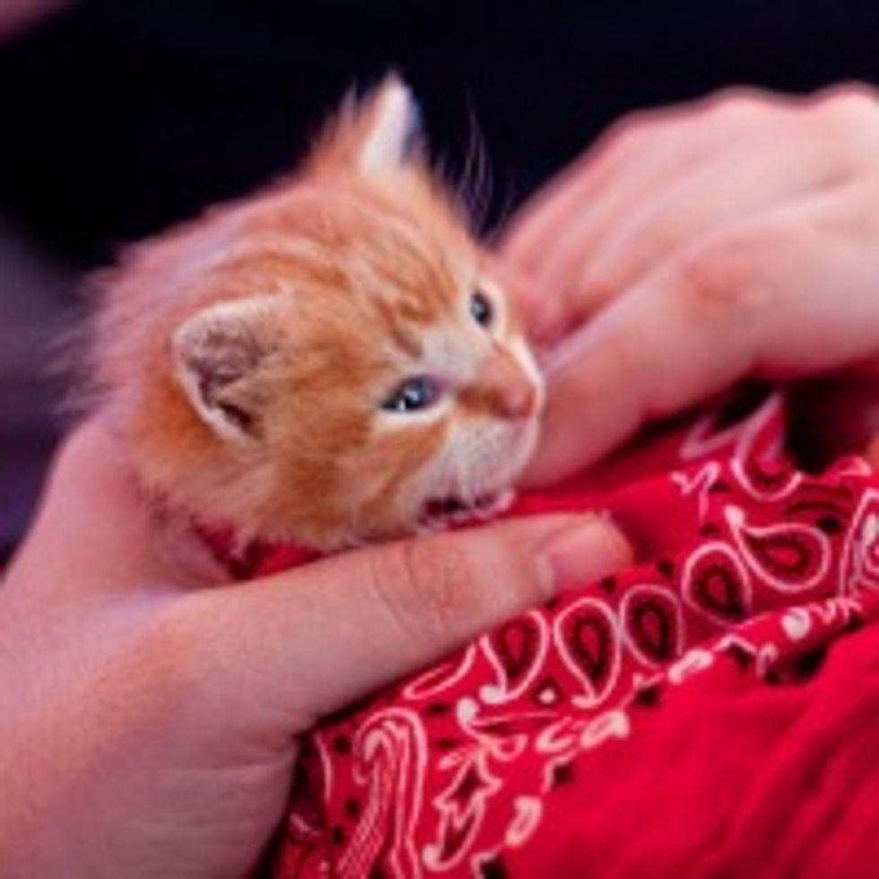 Pan the Kitty Adopts His Humans