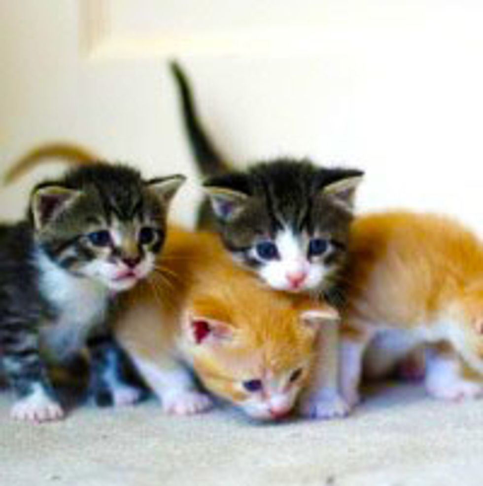 Furry Kitty Troop on the Prowl