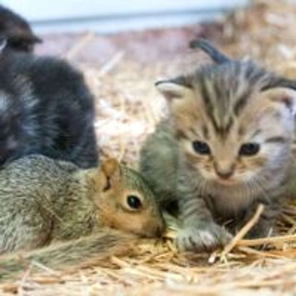 Cat Mama Adopts and Nurses Orphan Squirrel