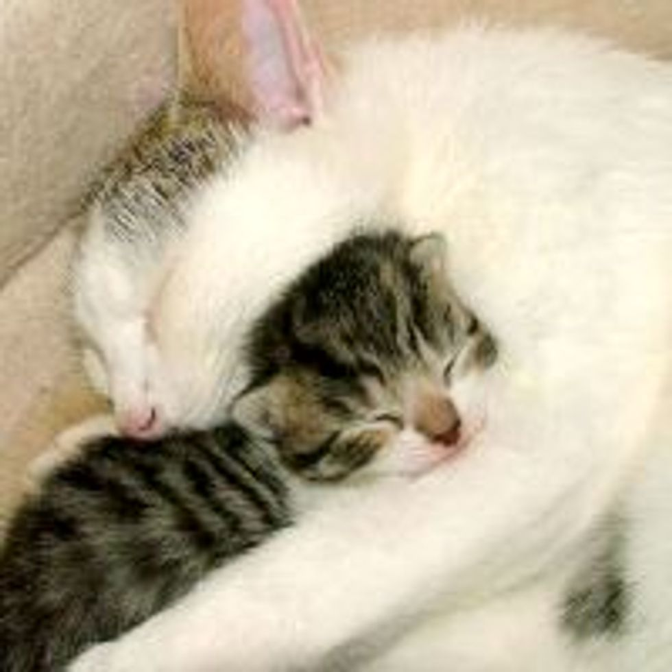Cat Mama: I Protect and Love You!