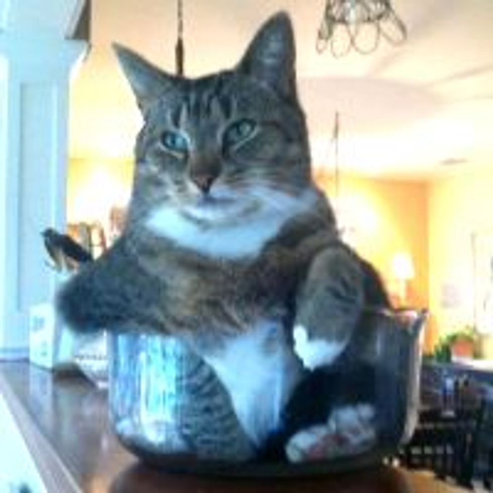 Kitty Likes to Sit in Small Bowls, Like a Boss