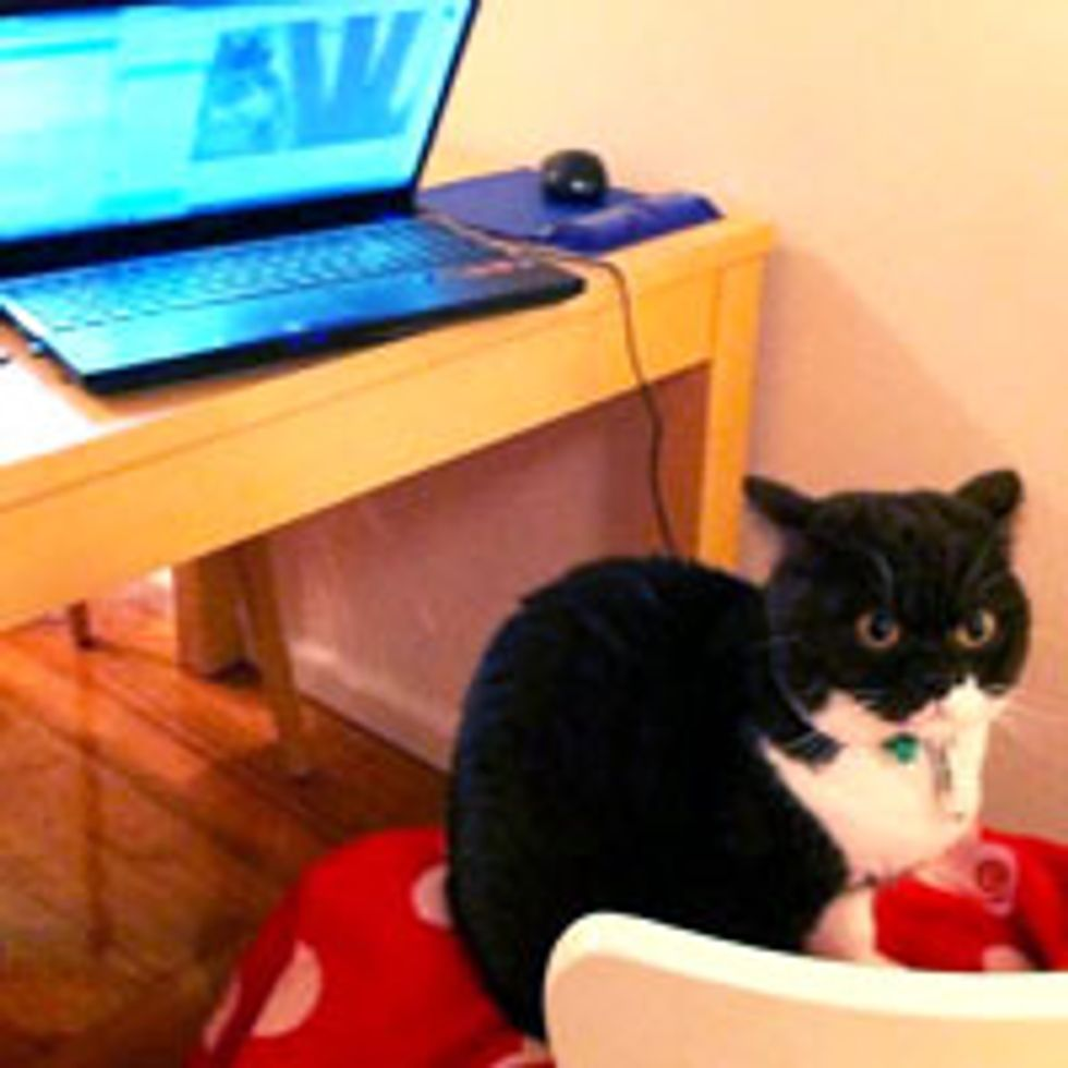Skyping with Human, Kitty Not Impressed