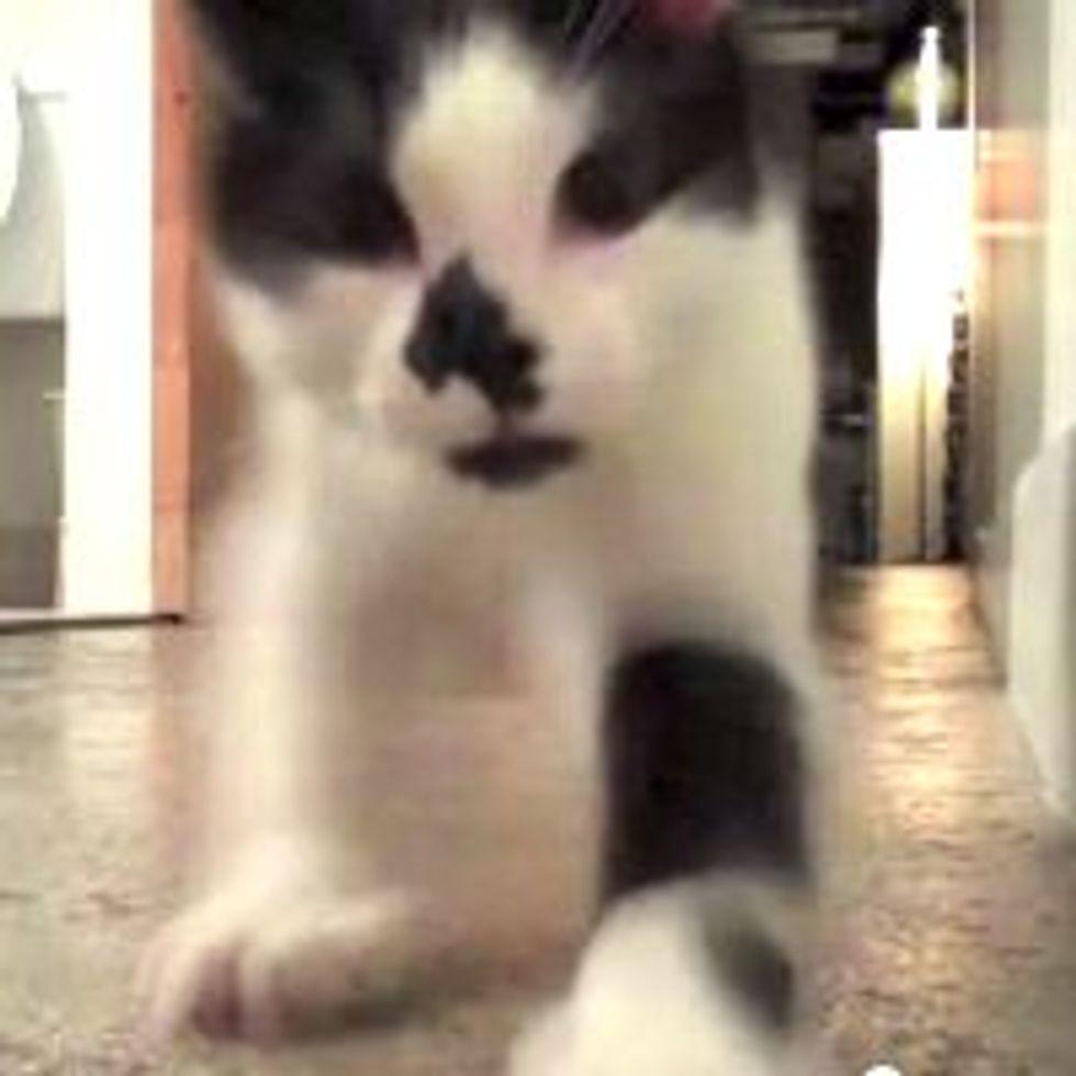 Kitten's Dance of Intimidation