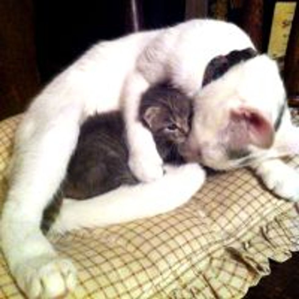 Orphan Kitten Finds New Mama, Love at First Sight