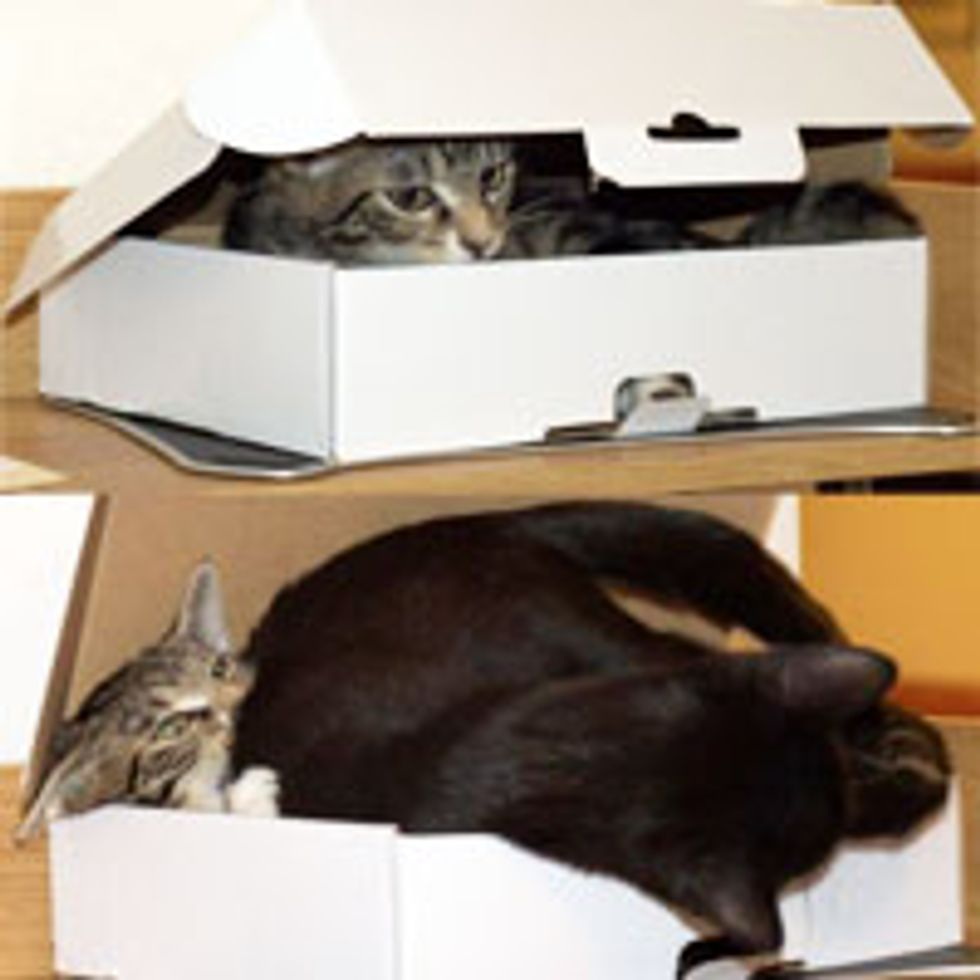 One Box, But Two Cats