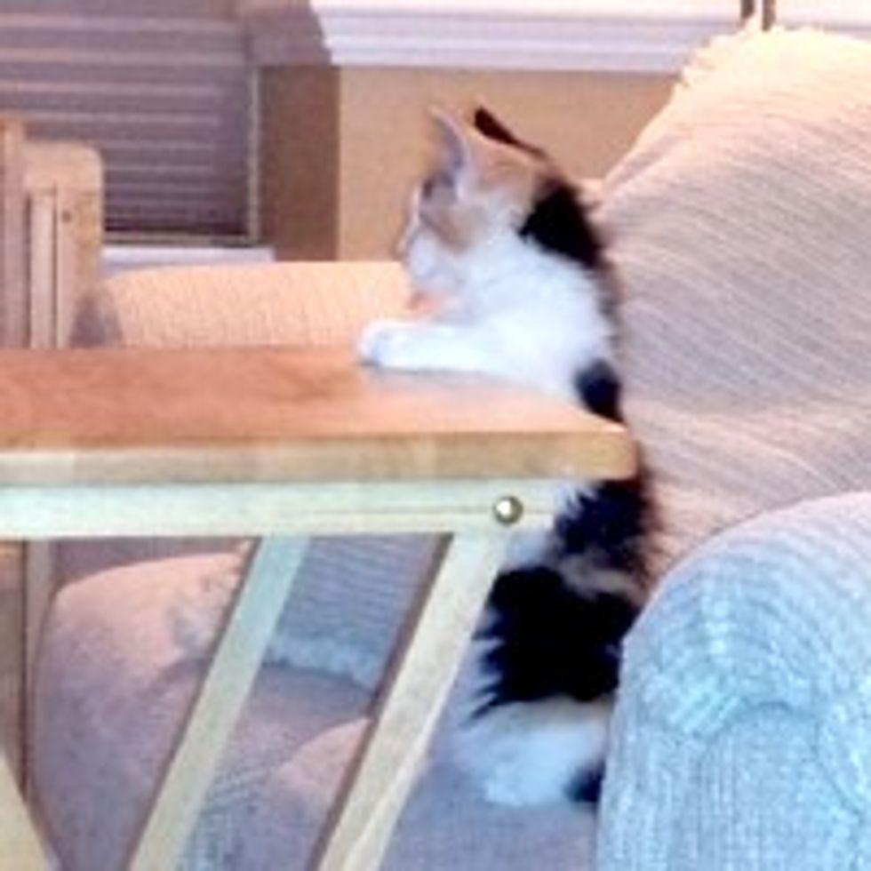 Zelda the Kitty Waits for TV Dinner