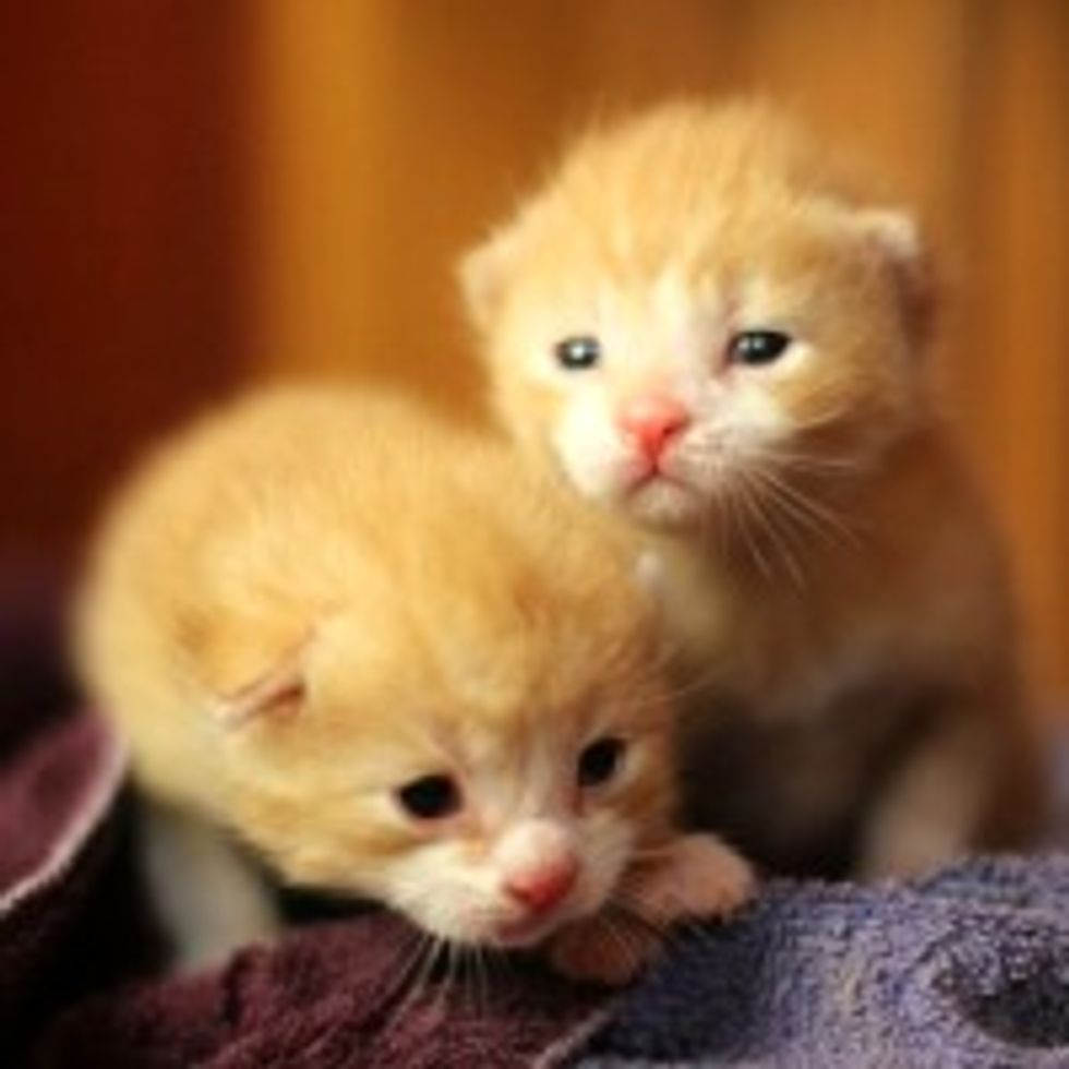 Bit and Bolt the Lucky Ginger Brothers