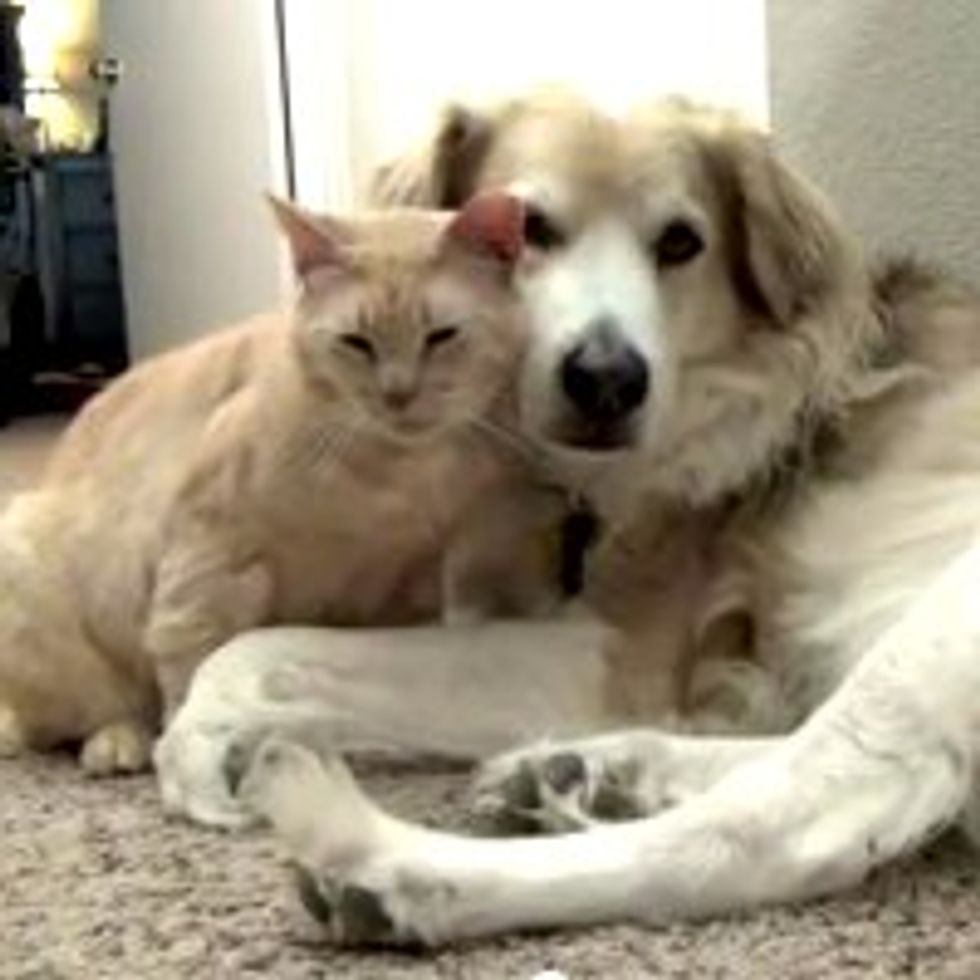 Rescue Kitty Gives Dog Love Attack