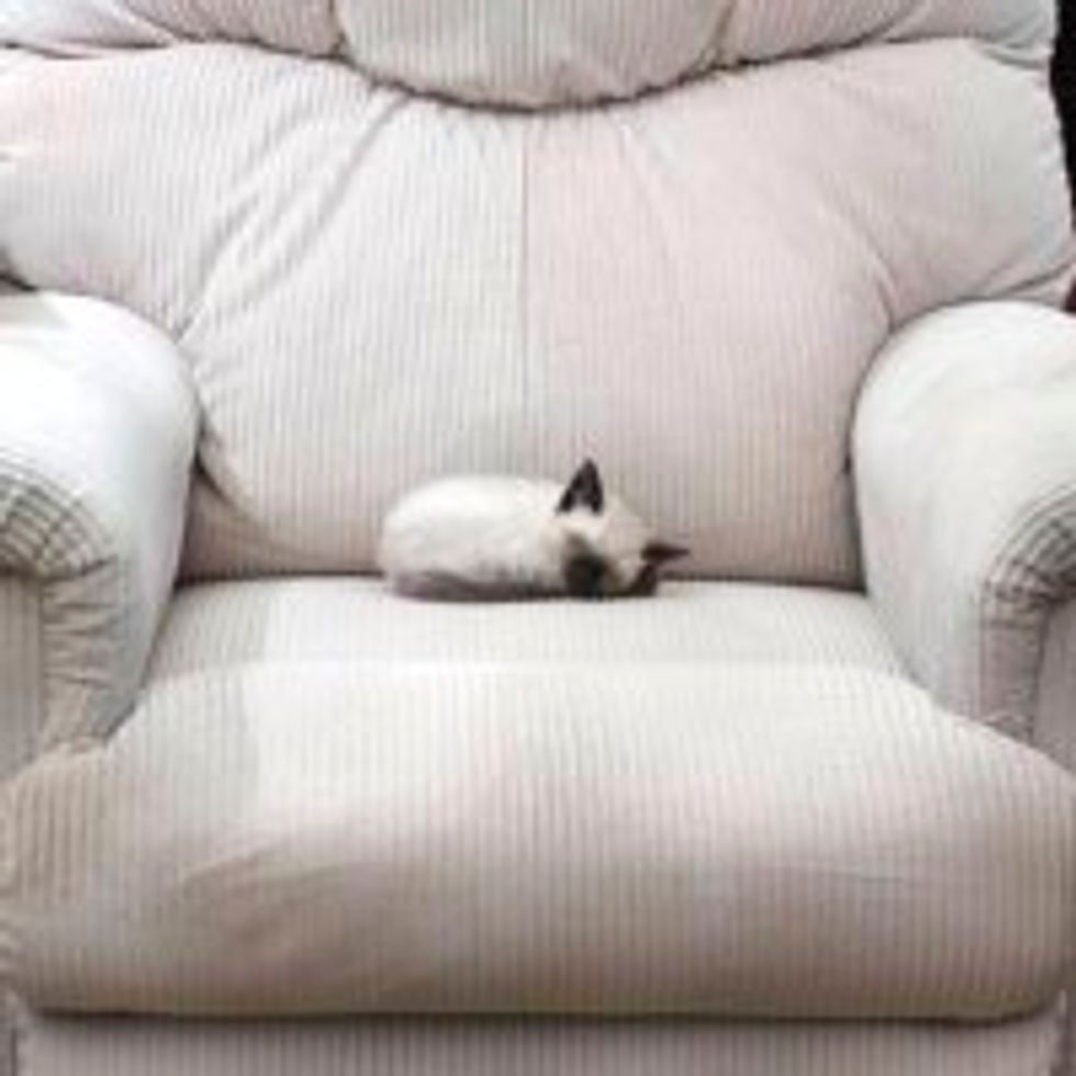 Kitten Takes Up the Whole Recliner