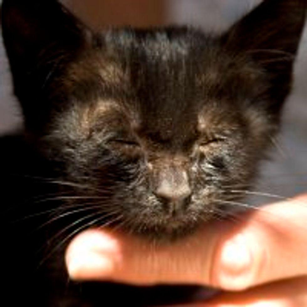 Little Furball Found Under a Palm Tree