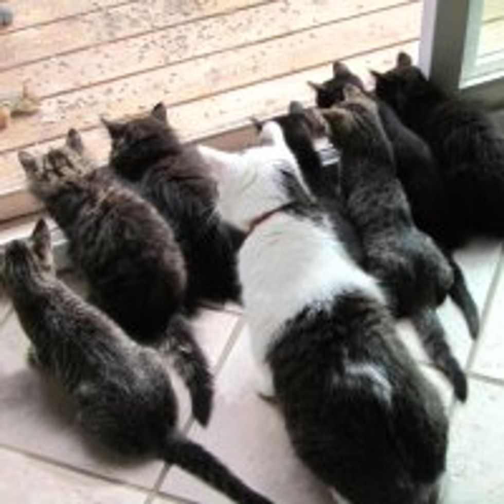 Foster Kittens and Their Uncle Kitty Buster: Chipmunk Watching