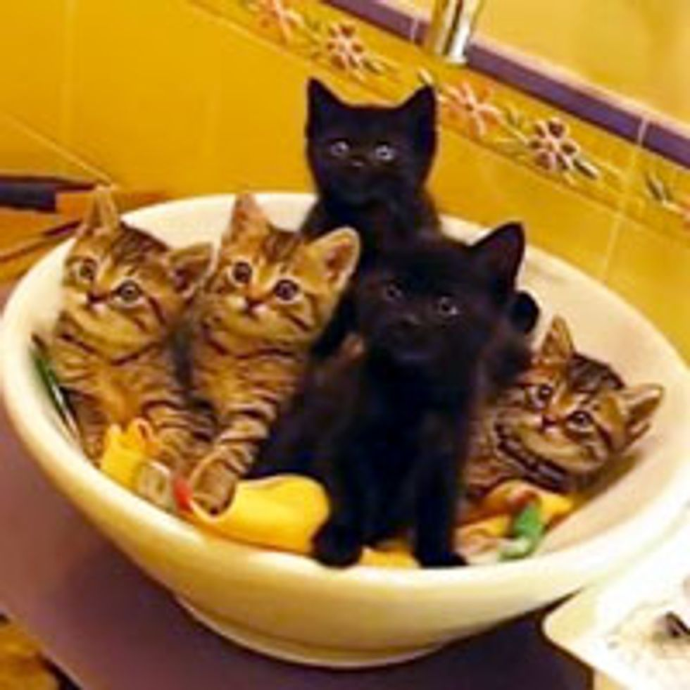Synchronized Foster Kitties in the Sink