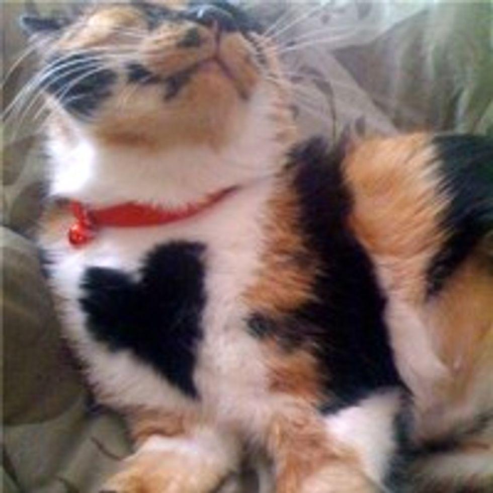 Bernice the Kitty Gives Air Massage Followed by a Hug