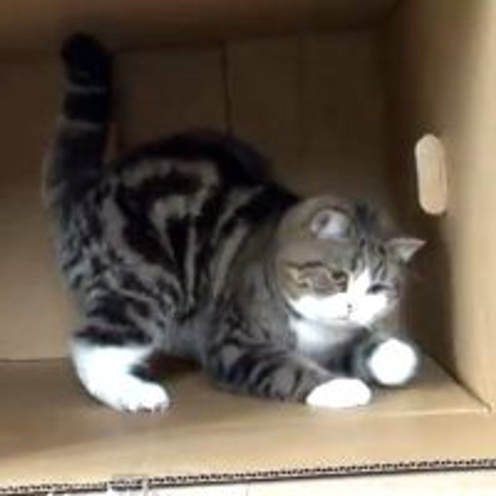 Maru Fends Big Box from Evil Mop