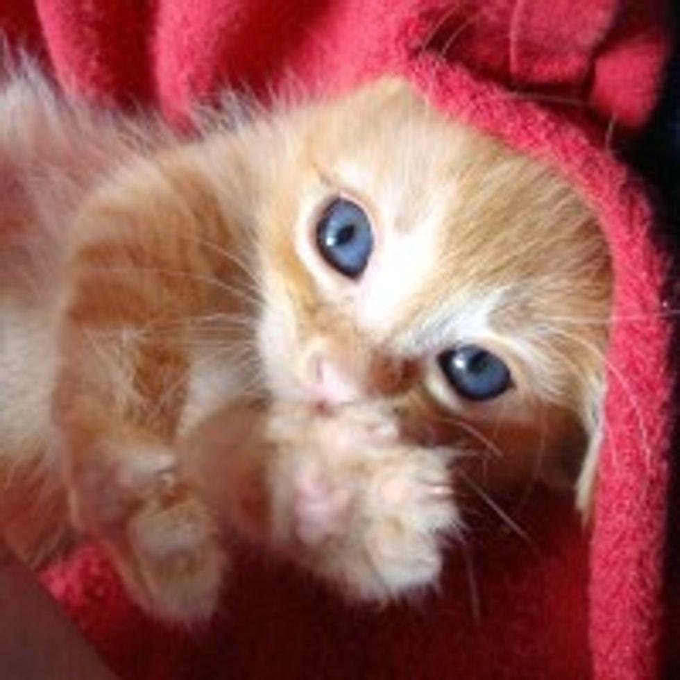 Tiny Ginger Kitten Beats the Odds