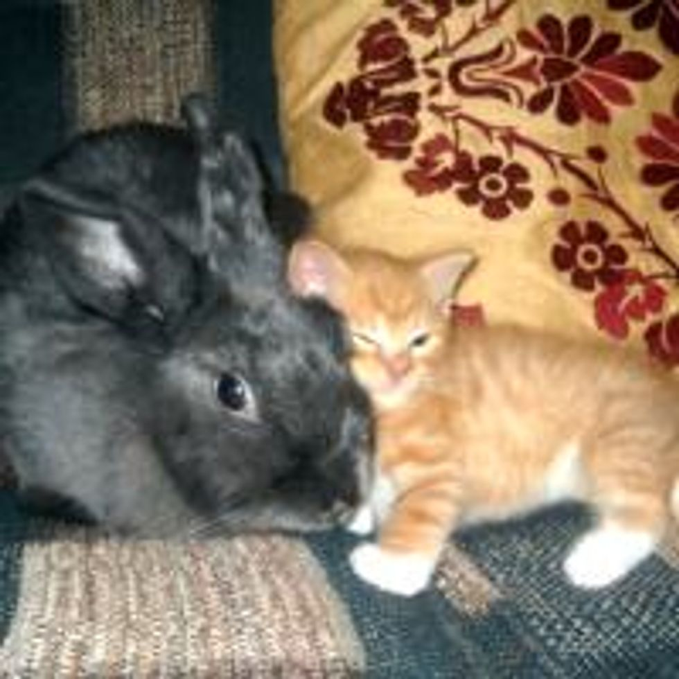 Kitty Finds New Mama Who Has Long Ears and Hops