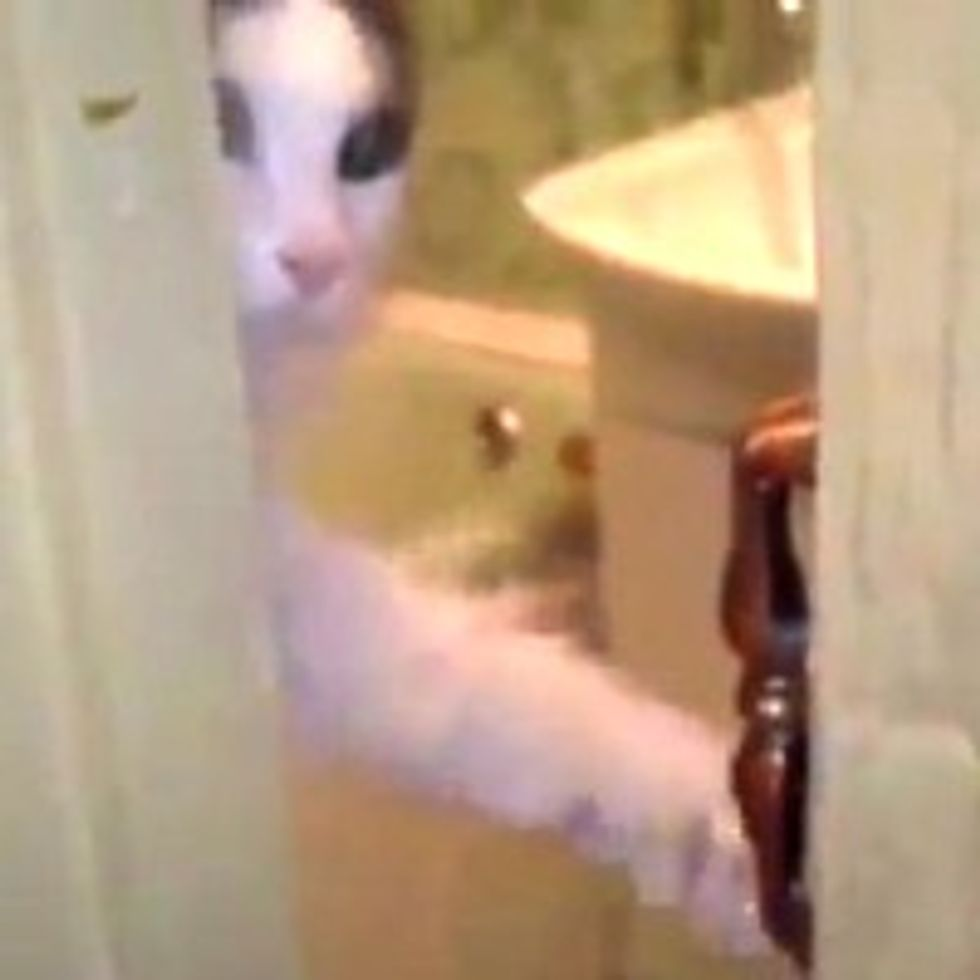 Kitty Wants Privacy!