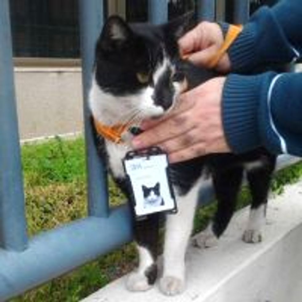 Stray Cat Receives Employee Badge from IBM