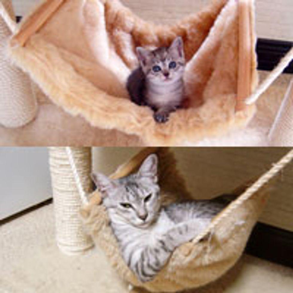 Hammock Kitty, Then & Now