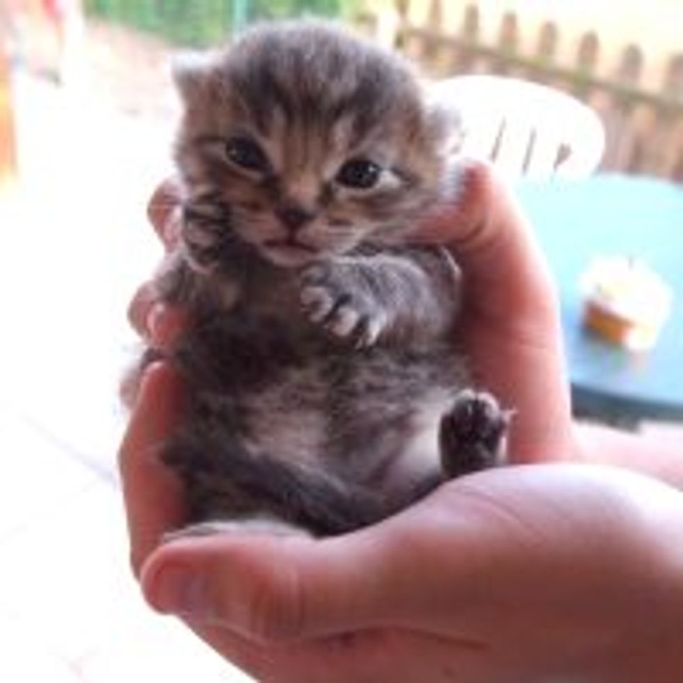 Teeny Kitty Susie Q Says Hi
