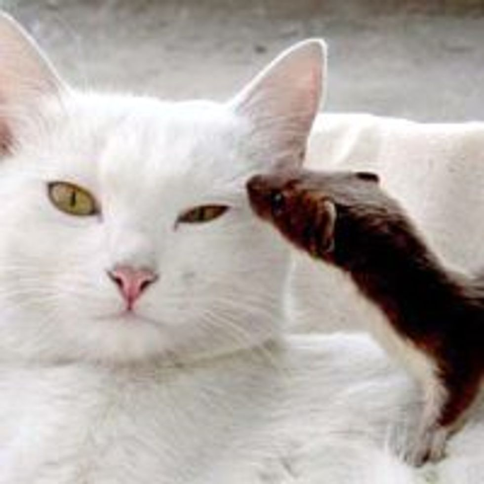 Cat Adopts Orphan Weasel